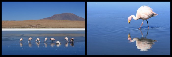 Bolivie Salar Uyuni Lagune Flamants Roses Ekla